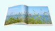 Ostseeküste - 81647390