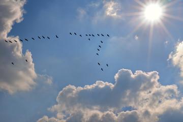 Zugvögel mit Sonne