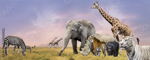 Foto op Canvas Neushoorn Savanna wild animals collage