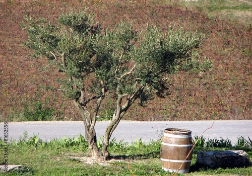 Papiers peints Oliviers olivier