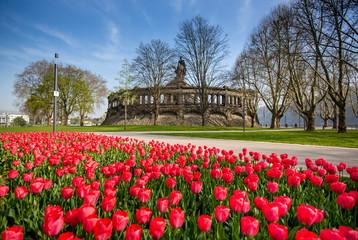 Tulpenmeer am Deutschen Eck