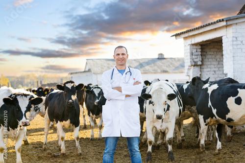 Leinwandbild Motiv veterinarian at  farm cattle