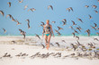 Flock of birds on the beach.