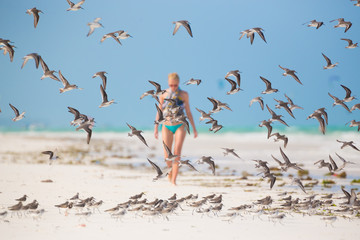Flock of birds on the beach.