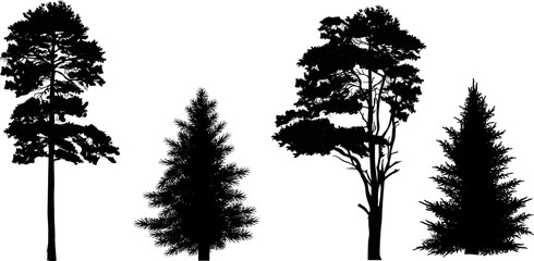 four pine and fir silhouettes isolated on white