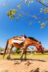 Horse service traveler at countryside of Thailand at Santichon v