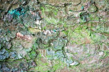 pine bark texture grenn moss covered