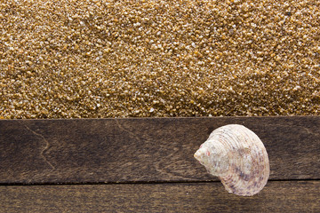 Ocean shell on a wooden board