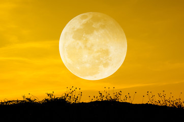 Big moon and grass silhouettes background sun set.
