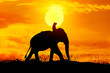 canvas print picture - Elephant and grass silhouettes background with sun set.