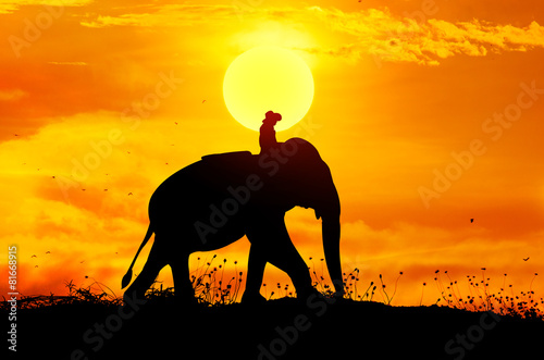 canvas print picture Elephant and grass silhouettes background with sun set.