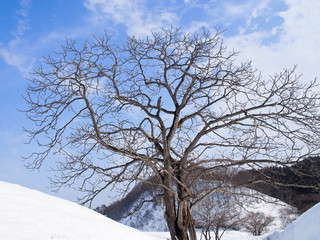 秋田の雪原