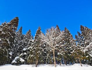 秋田の冬景色