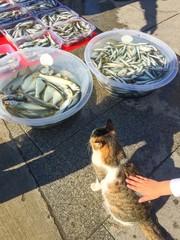 Aç Kedi ve Balıklar