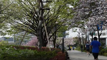 遅咲きの桜の下の日常