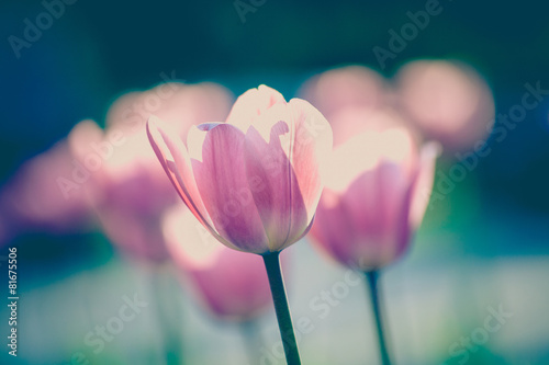 Deurstickers Tulp tulips in garden