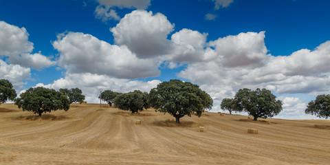 Campo de cereal en Salamanca