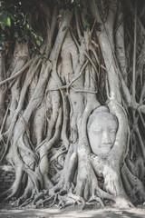 Head of Buddha statue in tree roots, Ayutthaya, Thailand