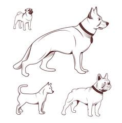 Dogs set for pet-shop.