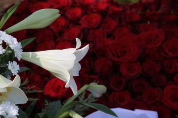 Weiße Lilie vor roten Rosen bei Beerdigung