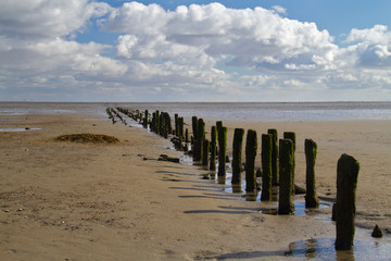 Wooden poles on a mudflat