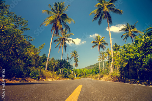 Nice asfalt road with palm trees - 81681562