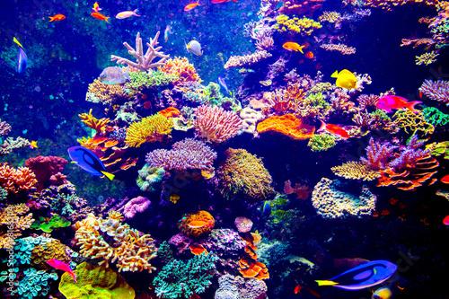Singapore aquarium - 81682114