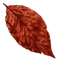 red dry leaf, vintage element