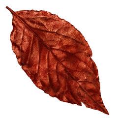 red dry leaf, vintage element