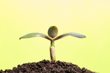 Green sprout growing from ground or the concept of starting a