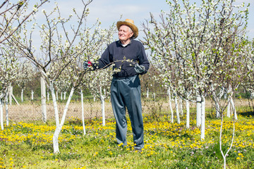 Elderly man in flowered cherry orchard. Selective focus