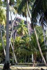 Kokosplantage auf La Digue
