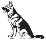 Sitting dog German shepherd
