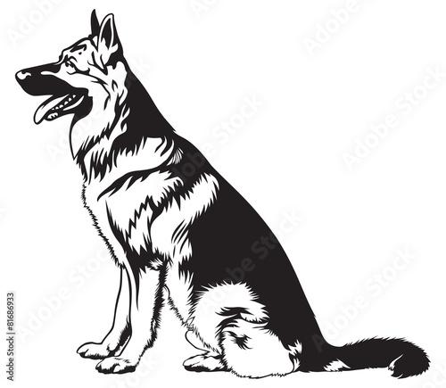 Fototapeta Sitting dog German shepherd