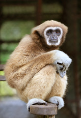 Photo fluffy monkey