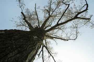 albero ripreso dal basso