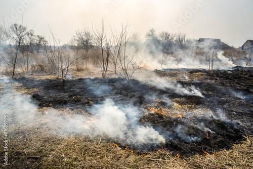 Grass in a fire - 81689795