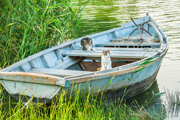 Two cats in a fishing boat