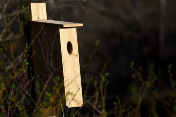 Nesting Box Standing in the Early Morning Sunlight