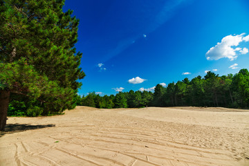 Sandy Clearing in Forest Landscape Scene