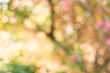 blurred yellow leaves tree crown background - 81694117