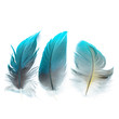 bird feathers ioslated - 81694192
