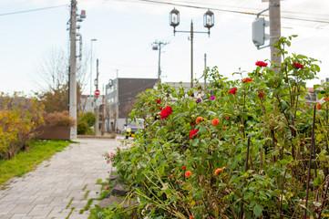 街角に咲く花