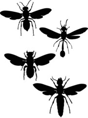 four wasp black silhouettes collection