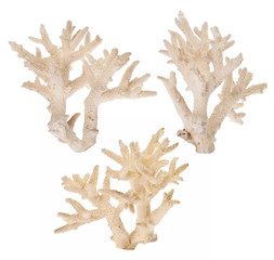 light isolated three coral branches