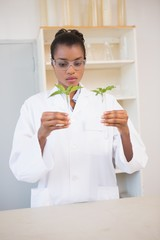 Scientist looking at sprouts in test tube