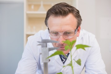 Scientist measuring plants