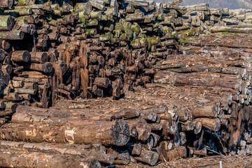 Stapel Holz mit Moos bewachsen
