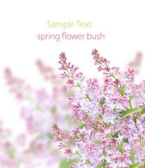 spring flower bush