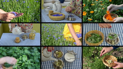 Hands gather herbs and make herbal tea. Footage collage